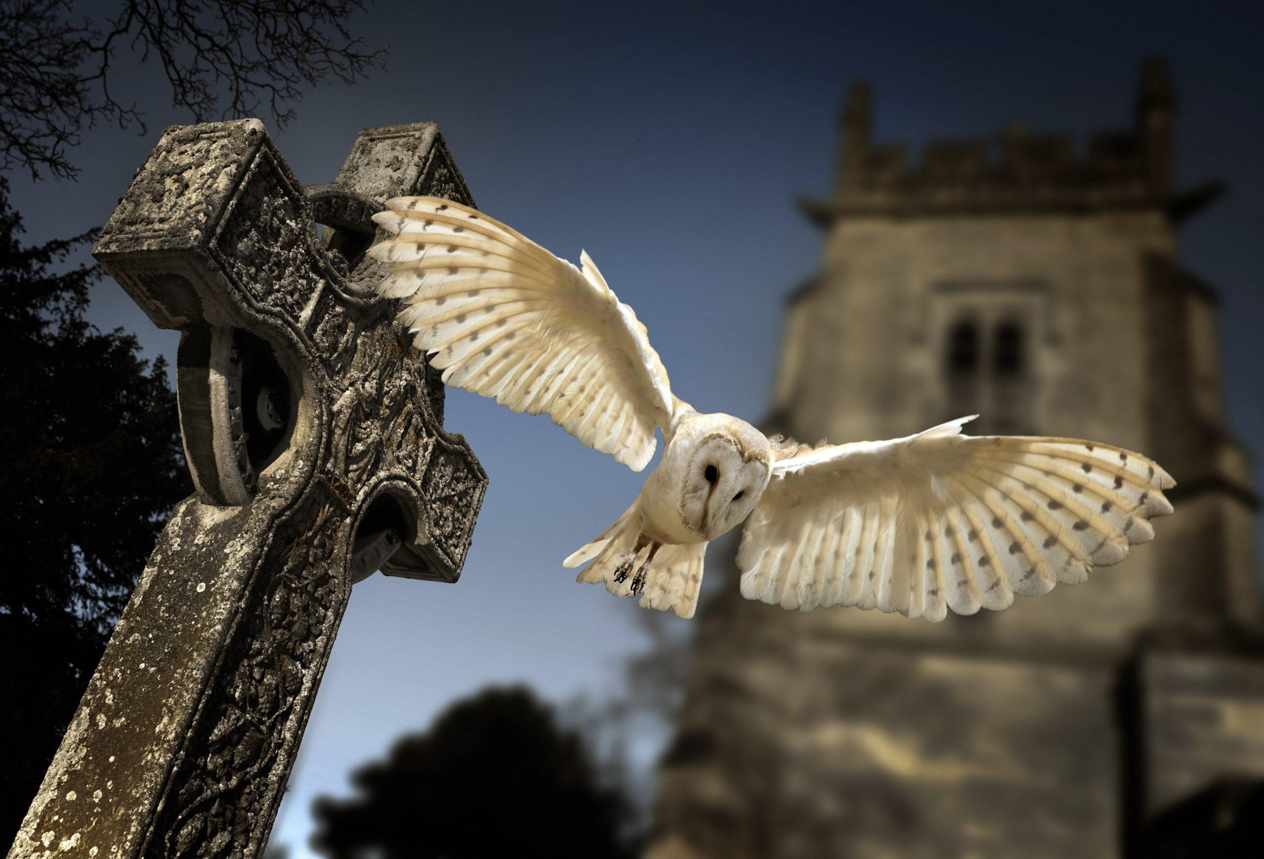 Funerals - Owl in grave yard